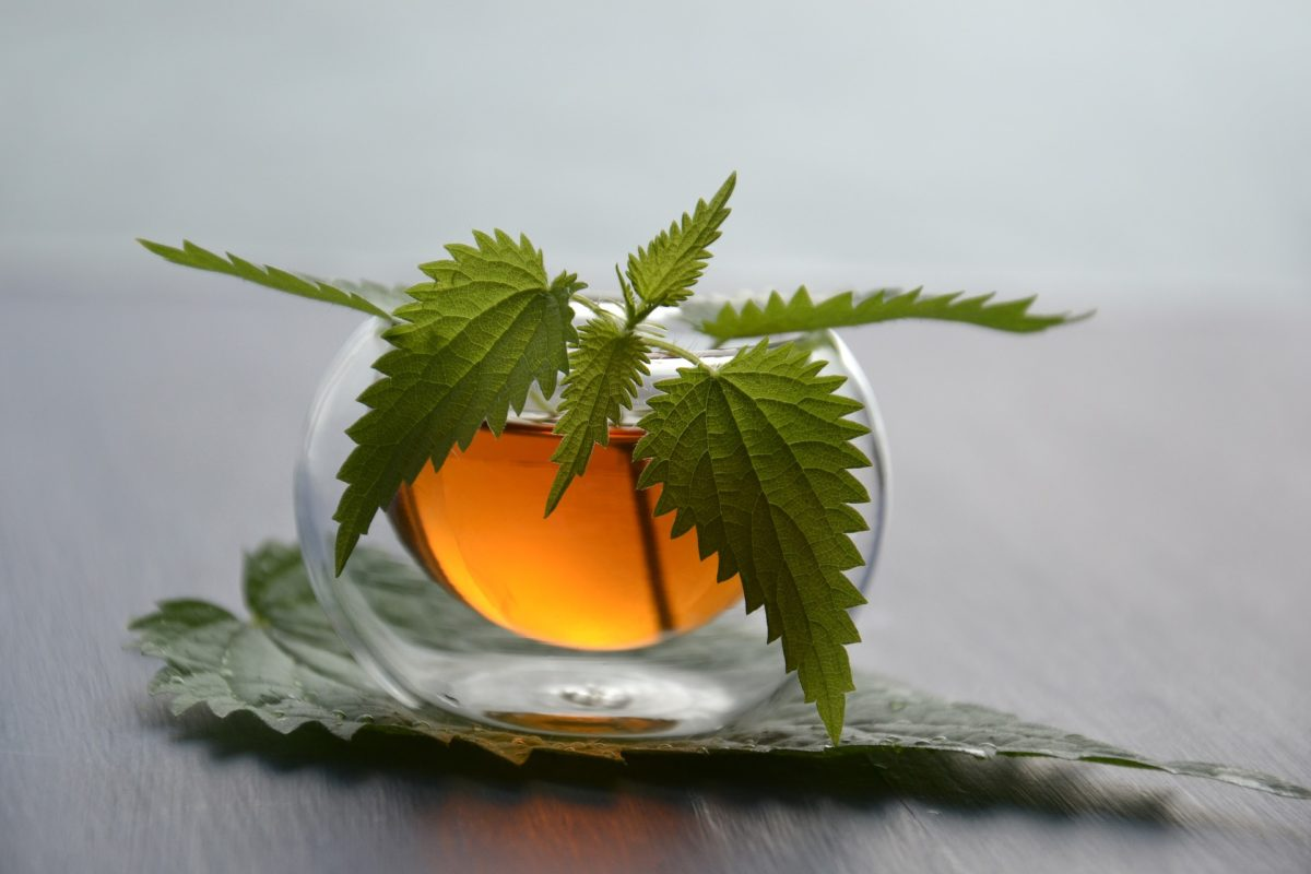 3 plantes naturelles pour lutter contre la fatigue
